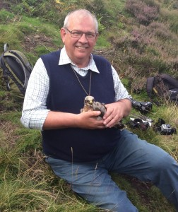 One of the fledged Hen harrier chicks from Bowland's grouse moors in 2014