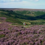 Grouse moor management helps maintain some of our most beautiful countryside