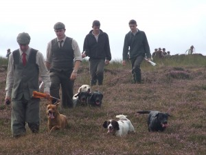 Grouse shoot beaters and dogs on Danby Moor - please credit Brian Sweeney (2)