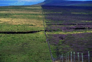 Lost heather moorland to the left of the fence line.